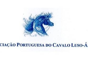 Sela portuguesa para venda